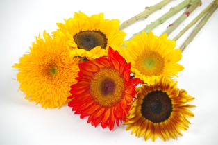 Sunflower Fundraiser Questions
