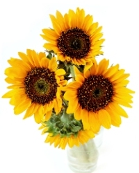 sun flower gram fundraising idea